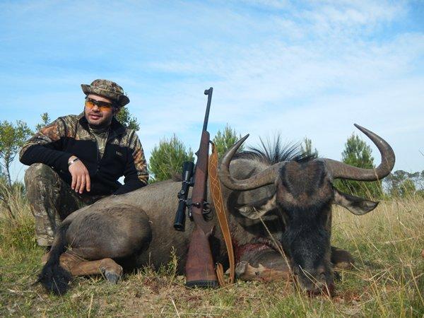m_blue_wildebeest.jpg