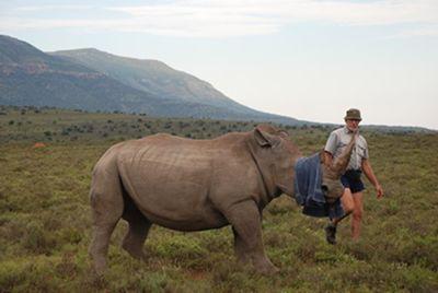 rhinocap2.jpg