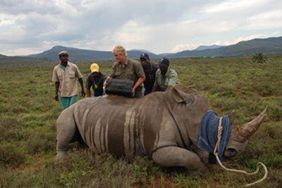 rhinocap3.jpg